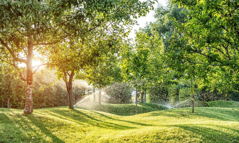 Landscape & Irrigation Tips | Texas Title University